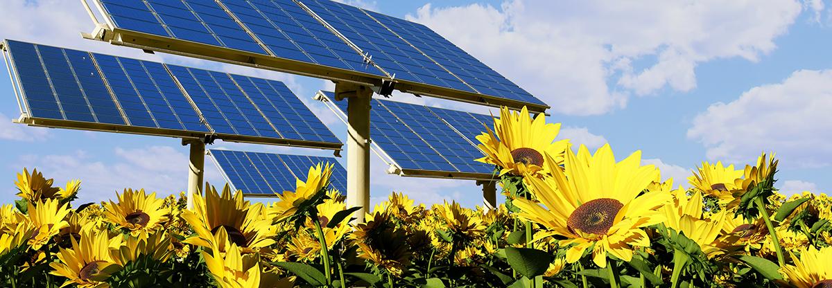 Impianto fotovoltaico, energia rinovabile, energy service company (ESCo)